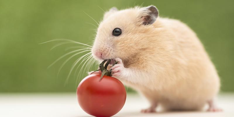 Top 10 Loài vật thông minh nhất thế giới