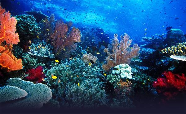 Top 8 Câu hỏi về đại dương  mà bé muốn bạn trả lời