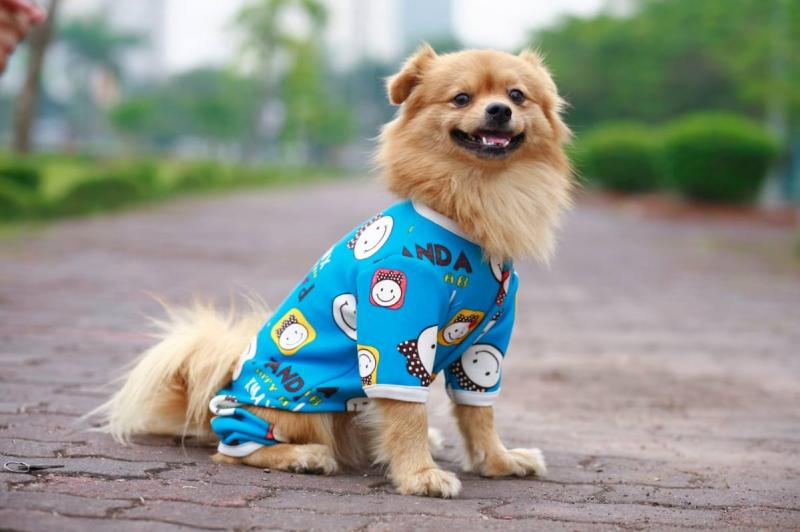 Top 4 Dịch vụ spa thú cưng tốt nhất ở Đà Lạt