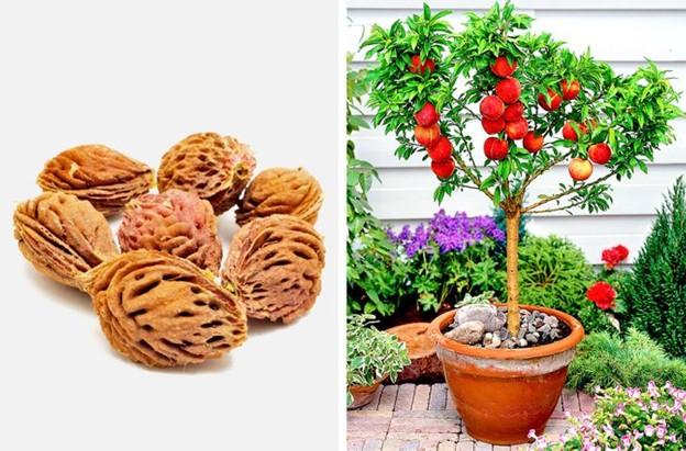 Top 8 Loại cây ăn quả có thể trồng từ hạt