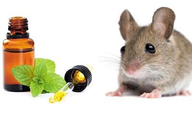 Top 10 Cách diệt chuột an toàn và hiệu quả nhất