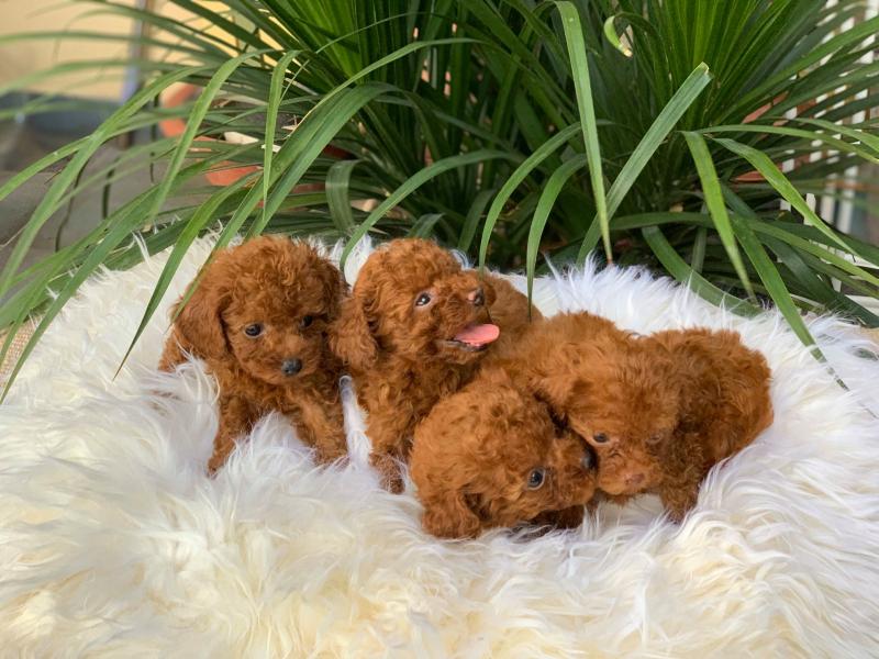 Top 9 Dịch vụ chăm sóc thú cưng uy tín nhất tại TPHCM