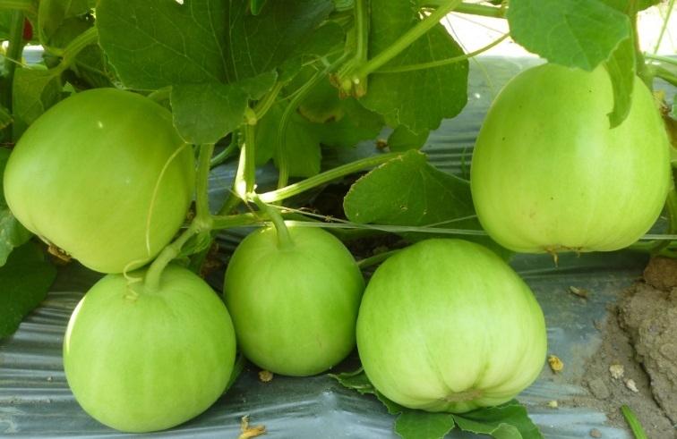 Top 15 Loại trái cây giúp mẹ bầu giải nhiệt ngày nóng
