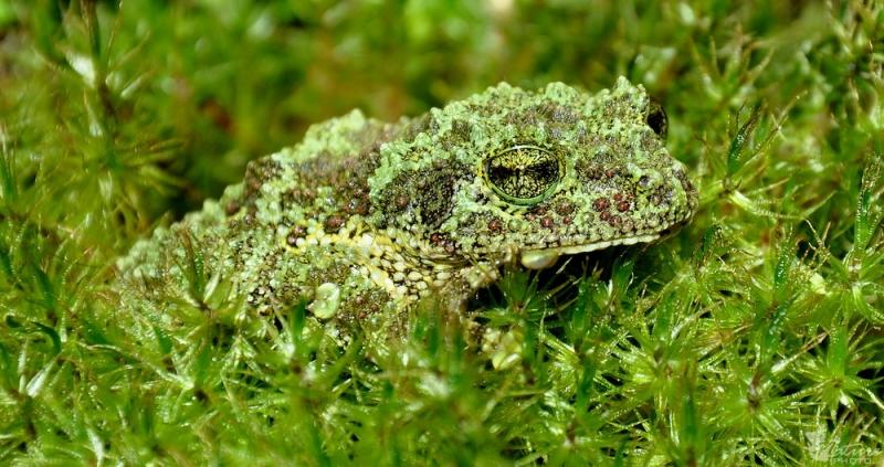 Top 10 Loài ếch kì lạ nhất trên thế giới