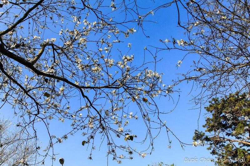 Top 11 Mùa hoa đẹp nhất tại Đà Lạt