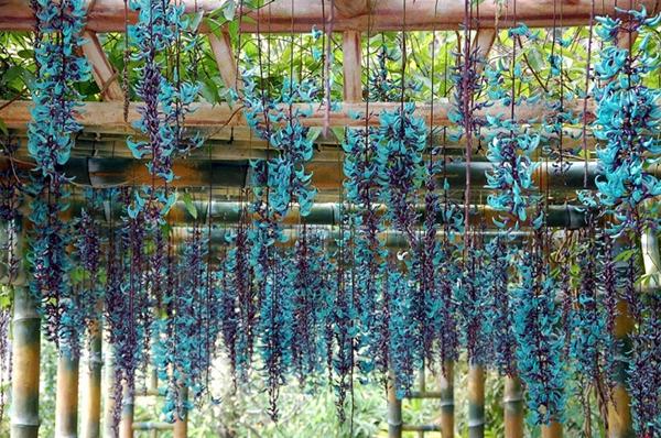 Top 15 Loài hoa leo tường đẹp nhà mát cửa và dễ trồng nhất