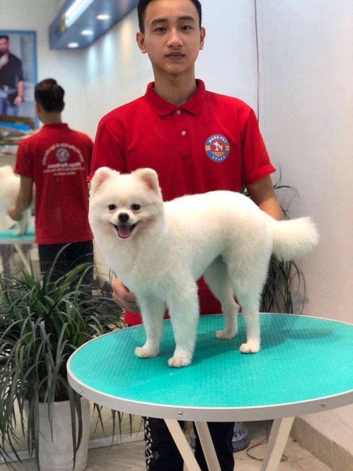 Top 10 Dịch vụ spa thú cưng tốt nhất tại quận Hai Bà Trưng, Hà Nội