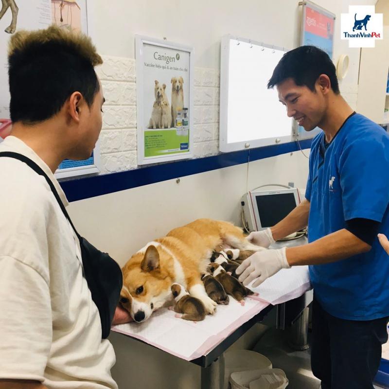Top 7 Phòng khám thú y uy tín nhất quận Thanh Xuân, Hà Nội