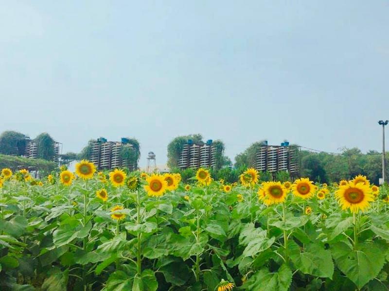 Top 15 Địa điểm chụp ảnh ngoại cảnh đẹp nhất ở Hà Tĩnh