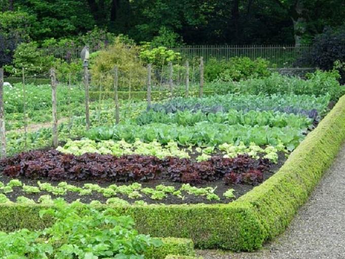 Top 10 Bài văn tả  khu vườn hay nhất