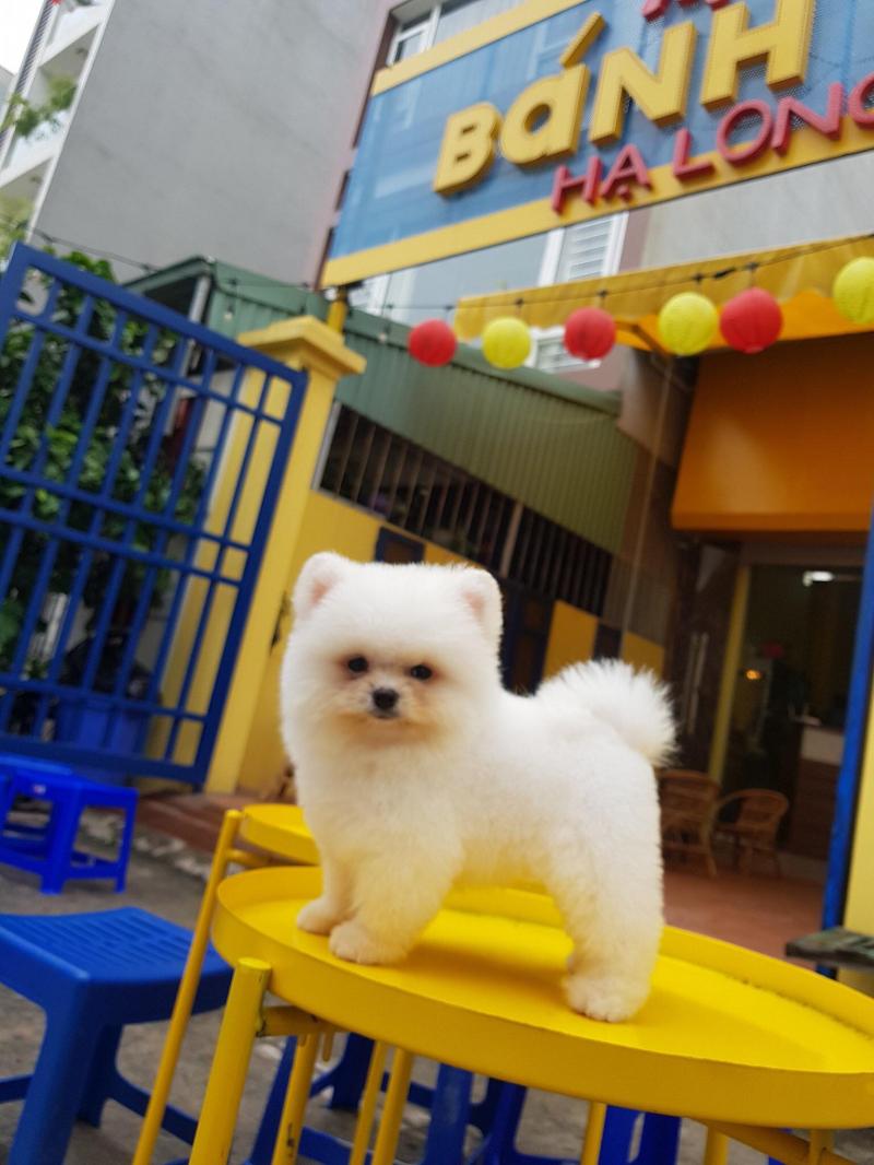 Top 5 Địa chỉ mua bán thú cưng uy tín nhất TP. Hạ Long, Quảng Ninh