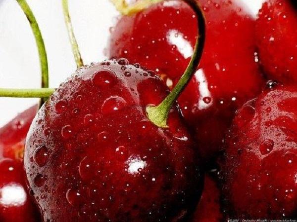 Top 10 Cửa hàng trái cây sạch và an toàn tại Hà Nội