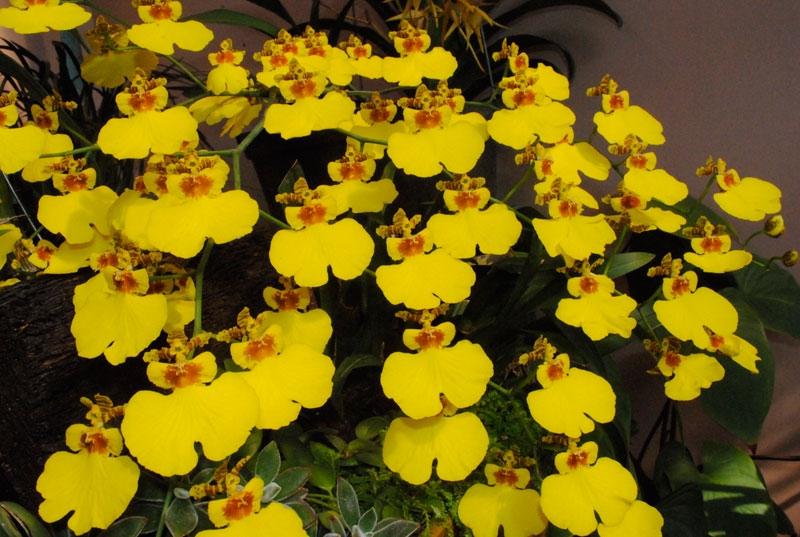 Top 12 Loài hoa lan đẹp và dễ trồng nhất hiện nay