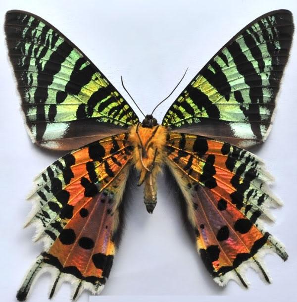 Top 10 Kỷ lục gia đặc biệt nhất trong thế giới côn trùng