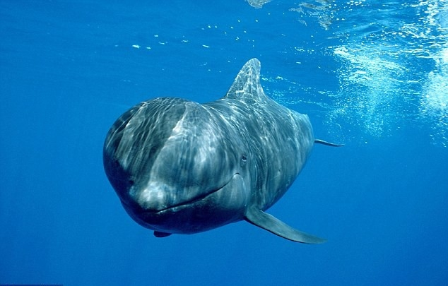 Top 10 Kỷ lục đặc biệt nhất trong thế giới động vật