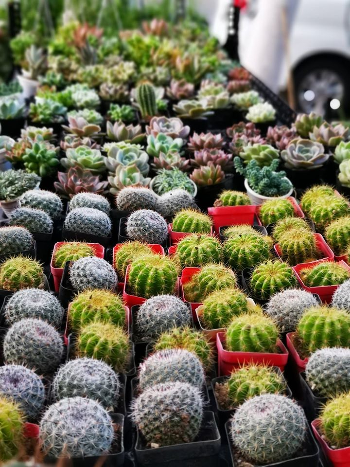 Top 8 Địa chỉ bán xương rồng đẹp nhất Đà Nẵng