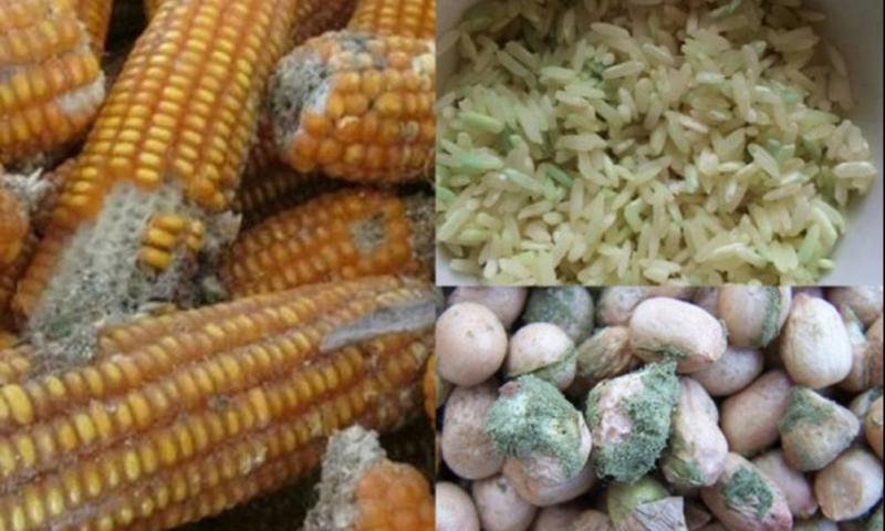 Top 4 điều xảy ra khi chúng ta ăn phải thực phẩm bị nấm mốc