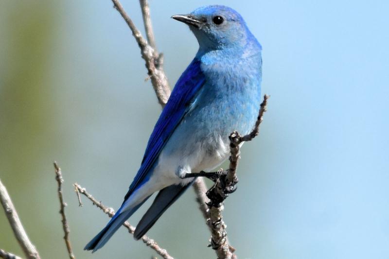 Top 10 Loài chim có giá trị cao nhất thế giới