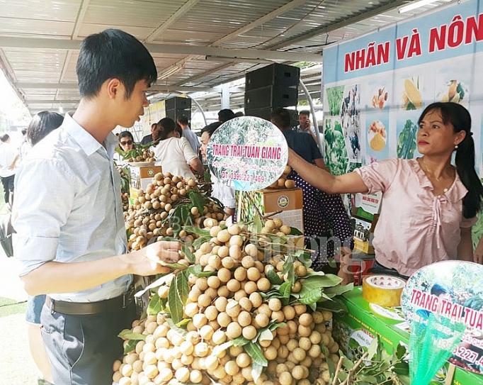 Top 8 Giống nhãn nổi tiếng nhất có giá trị kinh tế cao ở Việt Nam