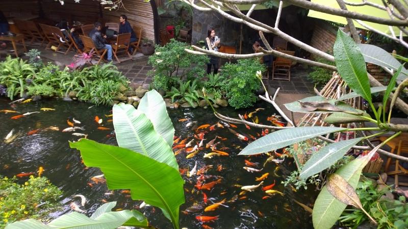 Top 11 Quán café  đẹp có sân vườn xanh mát nhất Đà Nẵng