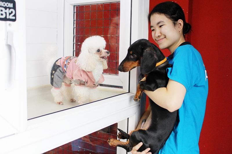 Top 11 Dịch vụ trông giữ thú cưng ngày Tết uy tín nhất tại thành phố HCM