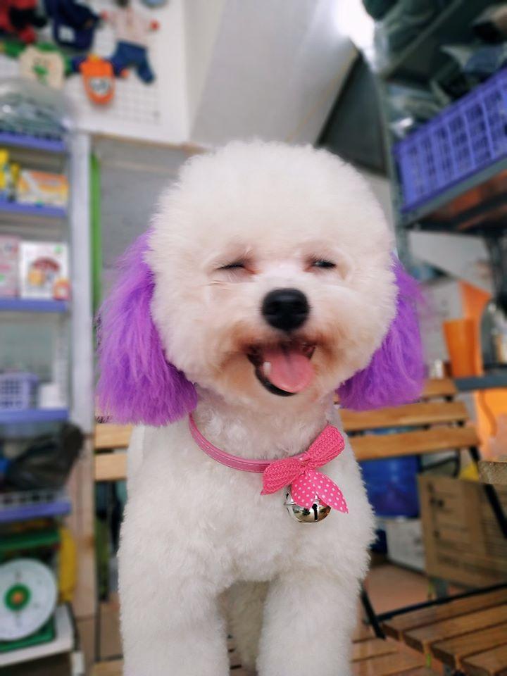 Top 5 Cửa hàng thú cưng và phụ kiện thú cưng tại Thành phố Vinh, Nghệ An