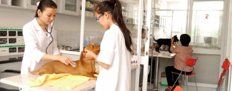 Top 6 Phòng khám thú y uy tín tại Hải Phòng