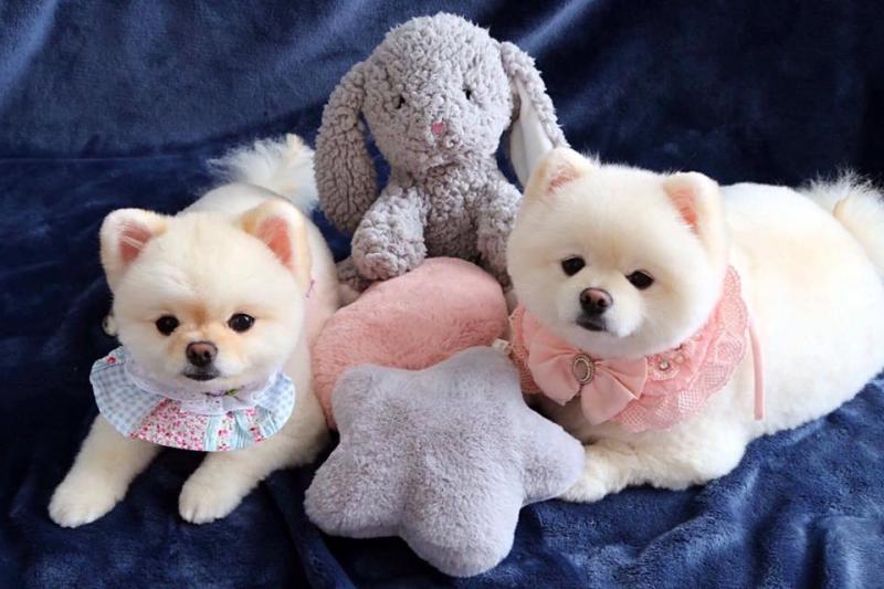 Top 9 Dịch vụ spa cho thú cưng uy tín nhất ở TP.HCM