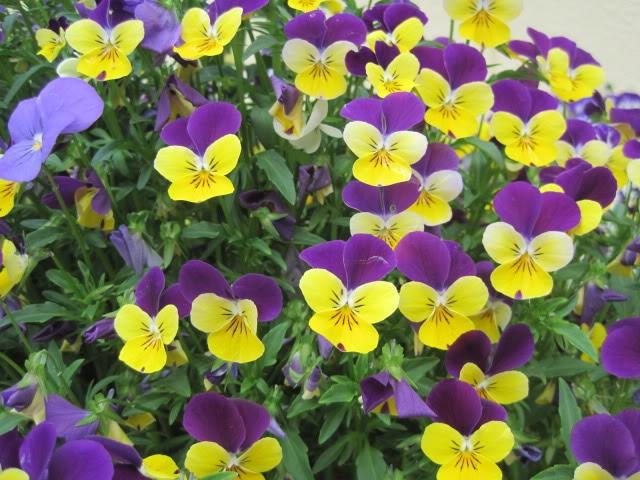 Top 5 địa chỉ mua hạt giống hoa uy tín và chất lượng nhất Hà Nội