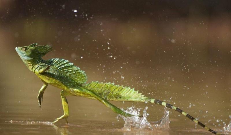 Top 10 động vật quái dị trong rừng rậm Amazon
