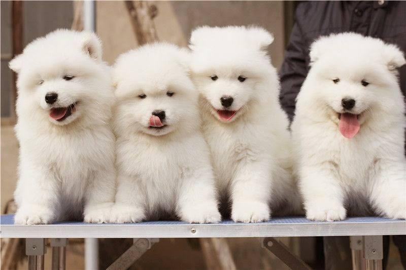 Top 8 địa chỉ bán thú cưng uy tín nhất Tp.HCM