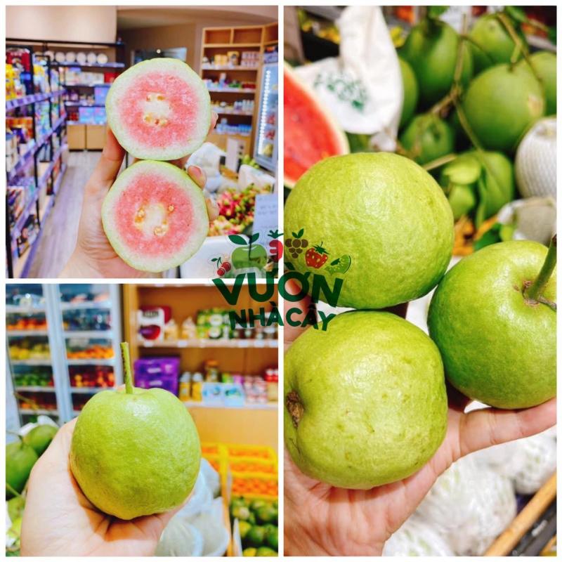 Top 5 Cửa hàng trái cây sạch và an toàn tại TP. Quy Nhơn, Bình Định