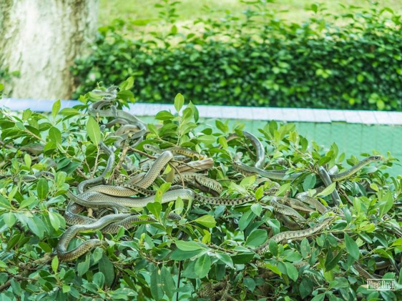 Trại rắn Đồng Tâm