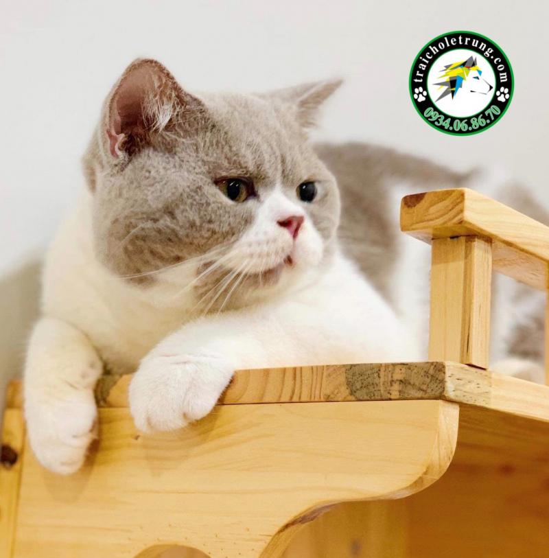 Top 8 địa chỉ bán mèo cảnh đẹp và chất lượng nhất Thành phố Hồ Chí Minh