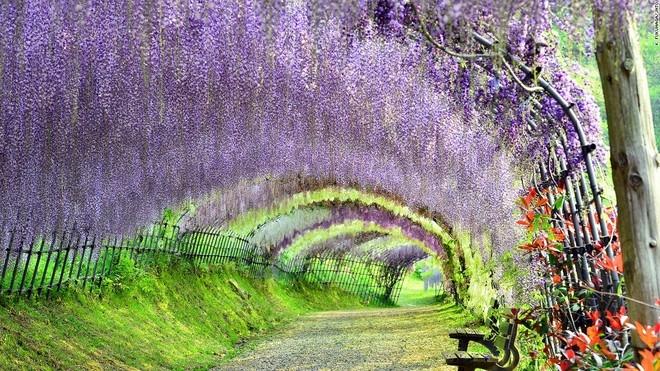 Top 13 địa điểm đẹp như thiên đường ở Nhật Bản