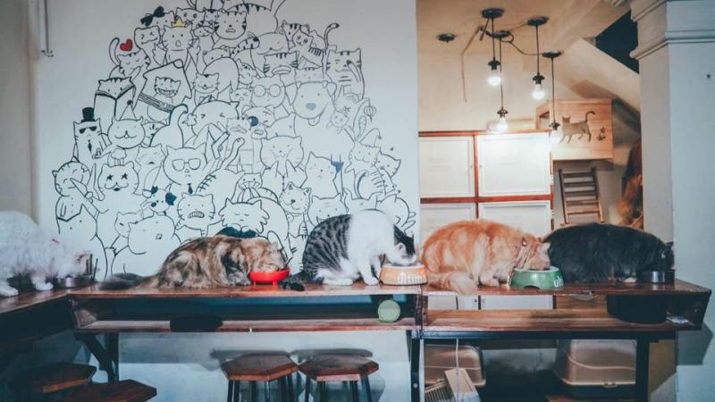 Top 5 Quán cafe thú cưng nổi tiếng nhất ở Hà Nội và thành phố Hồ Chí Minh
