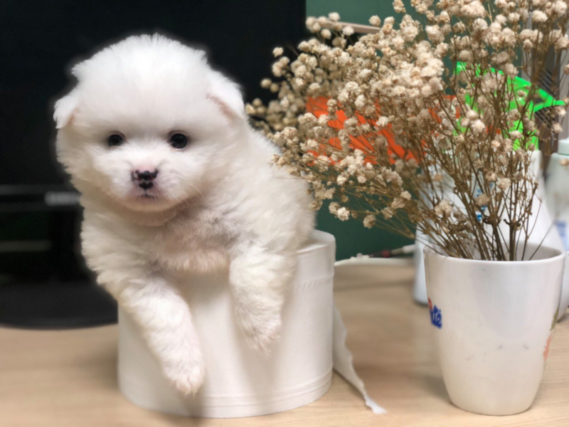 Top 6 Dịch vụ spa thú cưng tốt nhất tại quận Hà Đông, Hà Nội