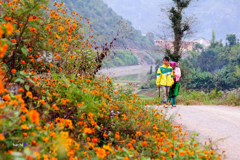 Top 8 Trải nghiệm thú vị du lịch tỉnh Hà Giang