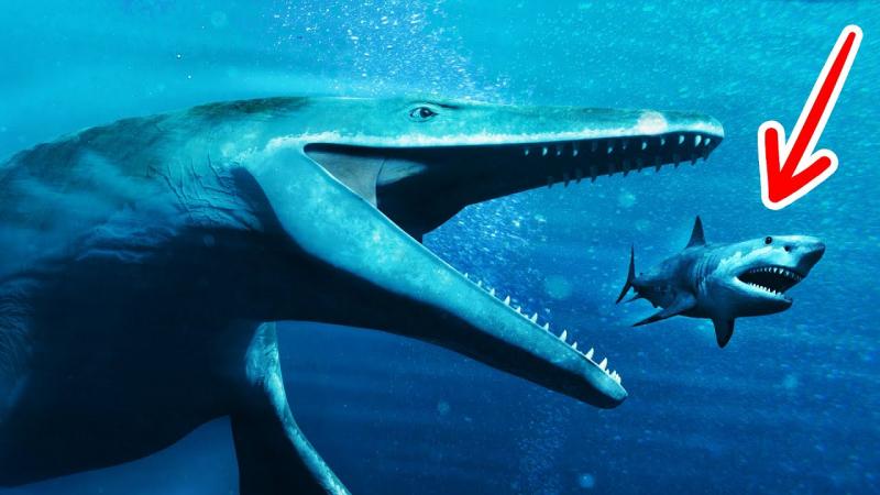 Siêu cá mập Megalodon