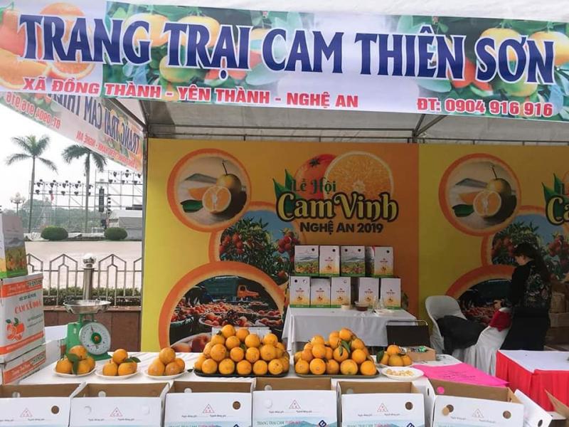 CAM XÃ ĐOÀI - Trang trại cam Thiên Sơn