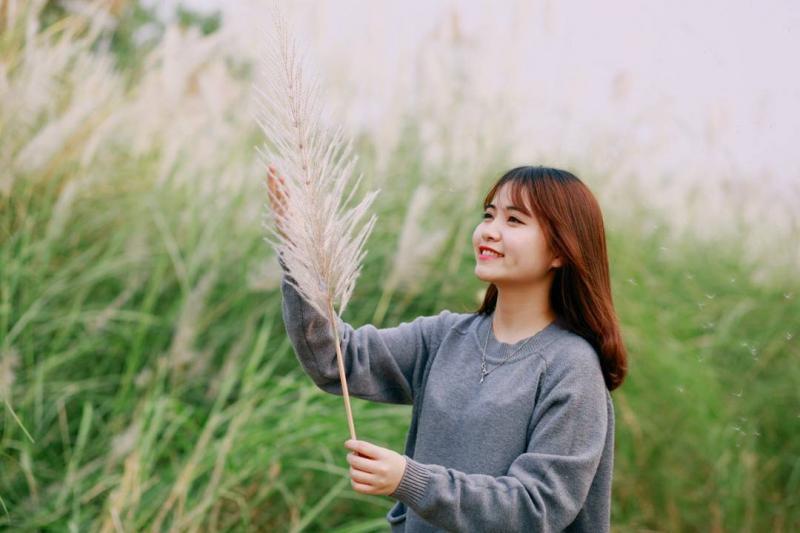Cánh đồng cỏ lau