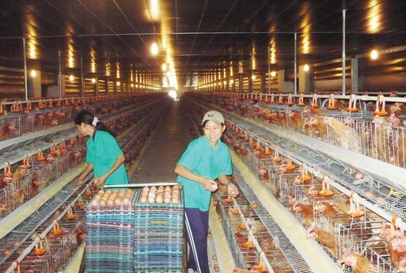 Công ty cổ phần phát triển nông nghiệp thanh niên xung phong
