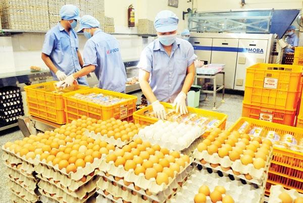 Chế biến trứng gà tại Công ty Vĩnh Thành Đạt.