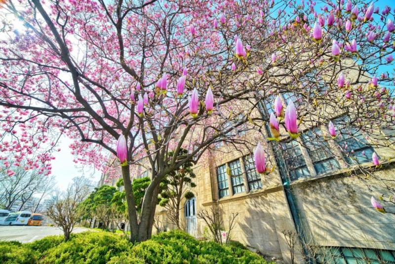 Khung cảnh mùa thu thanh bình tại Đại học Ewha