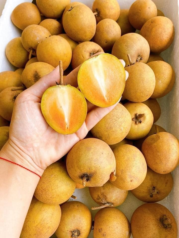 Diamond Fruits TG