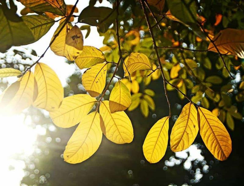 Thu Hà Nội, mùa thu trong giấc mơ, mùa của những nồng nàn và đắm say