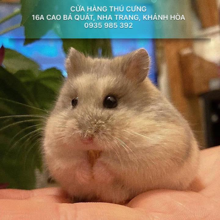 Hamster Shop Nha Trang