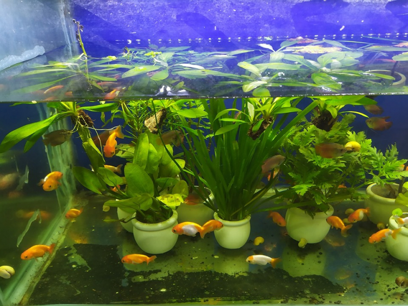 Hiền Phương - Đại lý cá cảnh, bể cá