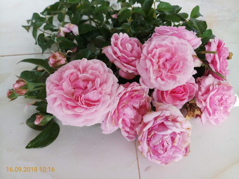 Hoa hồng.