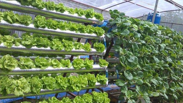 Tự trồng thực phẩm của riêng mình có thể giúp bạn ăn uống lành mạnh hơn